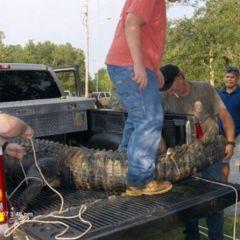 Обед для крокодила