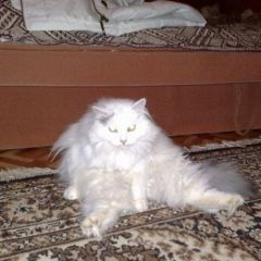 Прикольная подборка забавных котов