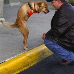 Двуногая собачка Вера