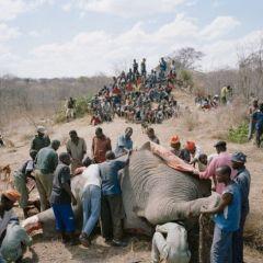 Поедание слона
