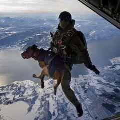 Собачка с парашютом