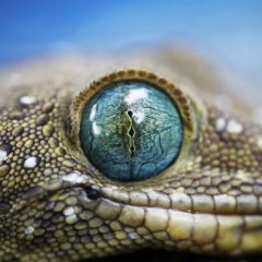 Глазки у животных