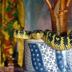 Храм Змей