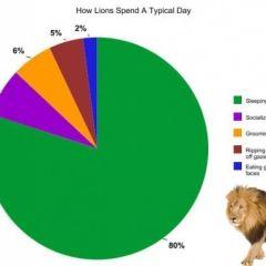 Как животные проводят свой обычный день