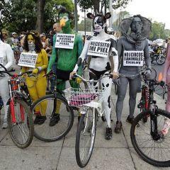 Голый заезд на велосипедах в Мехико