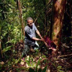 Незаконная вырубка лесов на Мадагаскаре