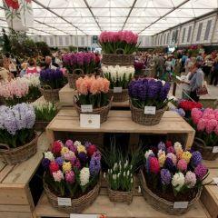Королевская выставка цветов в Челси