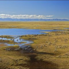 Аляска: Тут тоже когда-нибудь разольется нефть?