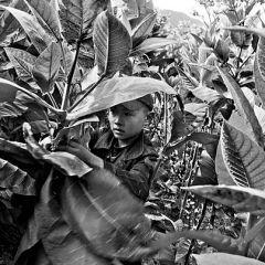 Дети на табачных плантациях Казахстана