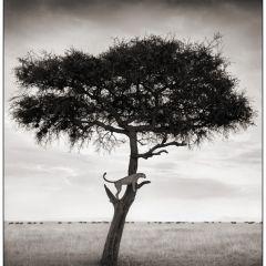 Дикие животные Африки – черно-белая фотография