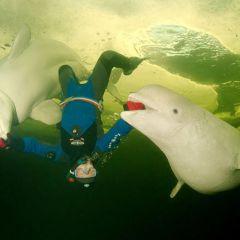 Подводные прогулки с белухами