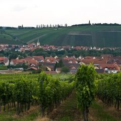 Вино и виноделие в Германии