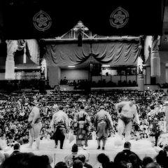 Чемпионы сумо