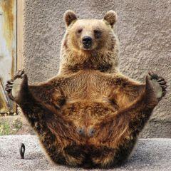 Медвежья йога