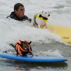 Чемпионат по серфингу между домашними питомцами