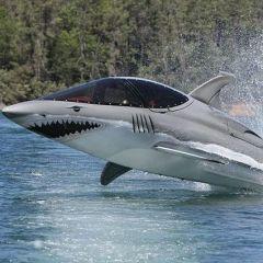 Креативная акула