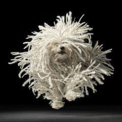 Фотоподборка собак
