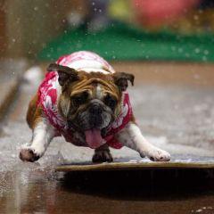 Собачьи водяные конкурсы