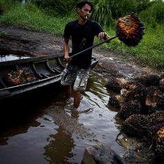 Уничтожение лесов на Суматре
