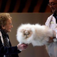 Английская выставка кошек