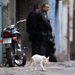 Работа бразильского спецназа