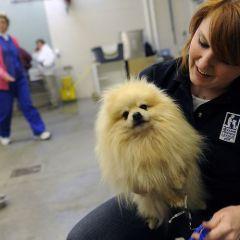 Бездомные собаки в США