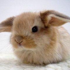 Кролики и крольчихи