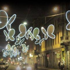 Миланские бабочки
