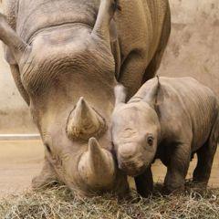 Новорожденные детеныши зоопарков