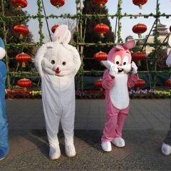 Китайский год кролика