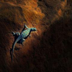 Февральские фотографии от National Geographic