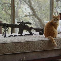 Необычные акессуары котов (Часть 2)