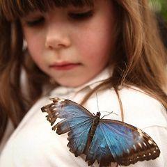 Лондонская выставка бабочек (Часть 2)