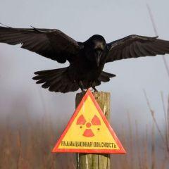 Чернобыль по прошествии 25 лет