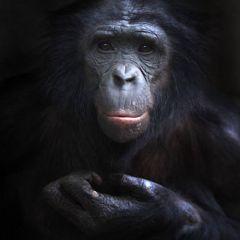 Наши древние предки во Франкфуртском зоопарке