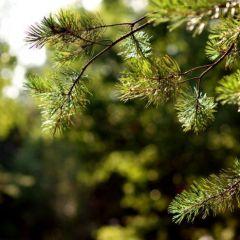 Подмосковный лес летом