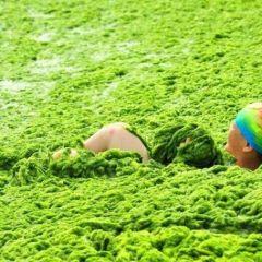 Нашествие водорослей в Китае