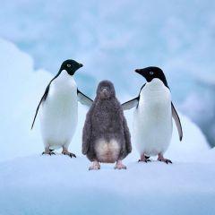 Семейства животных от Стива Блума