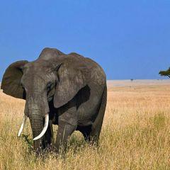 Топ самых больших сухопутных животных в мире