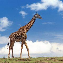 Топ самых больших сухопутных животных в мире (Часть 2)