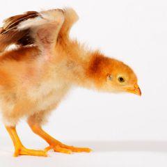 Смешные фотографии животных от Lennette Newell