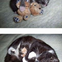 Котята имеют свойство вырастать