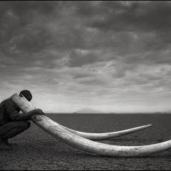 Дикая Африка в фотообъективе Ника Брандта
