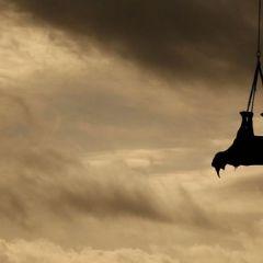 Носороги в небе