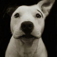Портреты бездомных собак