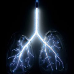 Неоновые скульптуры человеческих органов