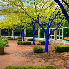 Проект Blue Trees