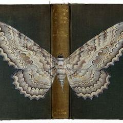 Бабочки на обложках книг