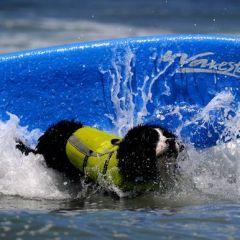 Собаки на гребне волны