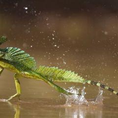 Представители фауны в собственной среде обитания